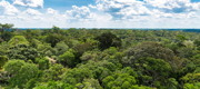 The Amazonian forest represents a unique potential for identifying new cosmetic actives. Photo credit: Filipe Frazao - shutterstock.com