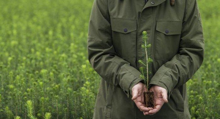 Les actions de durabilité de Metsä Board distinguées par EcoVadis