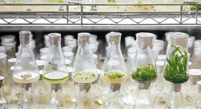 Codif Technologie Naturelle : Des biotechnologies aux bioth-ecologies