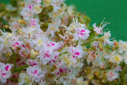 Obtained from organic horse chestnut flowers, Gatuline Link n Lift has been...
